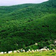 روستایی تاریخی در پنج کیلومتری لواسان