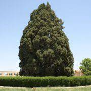 درختهای-کهنسال-ایران