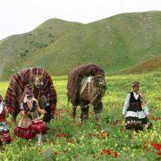 خراسان-شمالی -تورهای غیرمجاز گردشگری