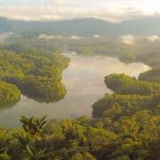جنگل-آمازون