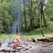 جنگل راش در روستای سنگده