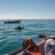 ورود بیش از ۳۳ هزار گردشگر به جزیره قشم