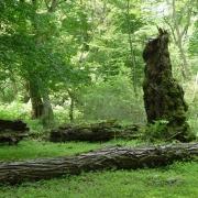 پارک جنگلی کشپل