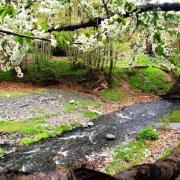 جنگل سربرج