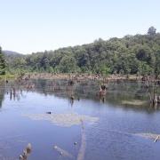 دریاچه ممرز