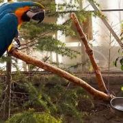 باغ پرندگان چهارباغ