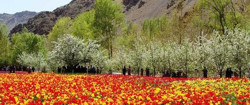 آسارا _نگین کوه های البرز