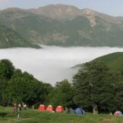 جنگل ابر شاهرود-جنگلهای هیرکانی