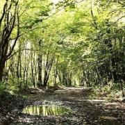 جنگل دلند