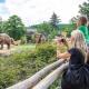 باغ وحش های اروپا