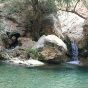 کاسه رود