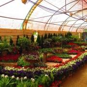 نمایشگاه دائمی گل محلات