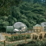 حباب های جنگلی